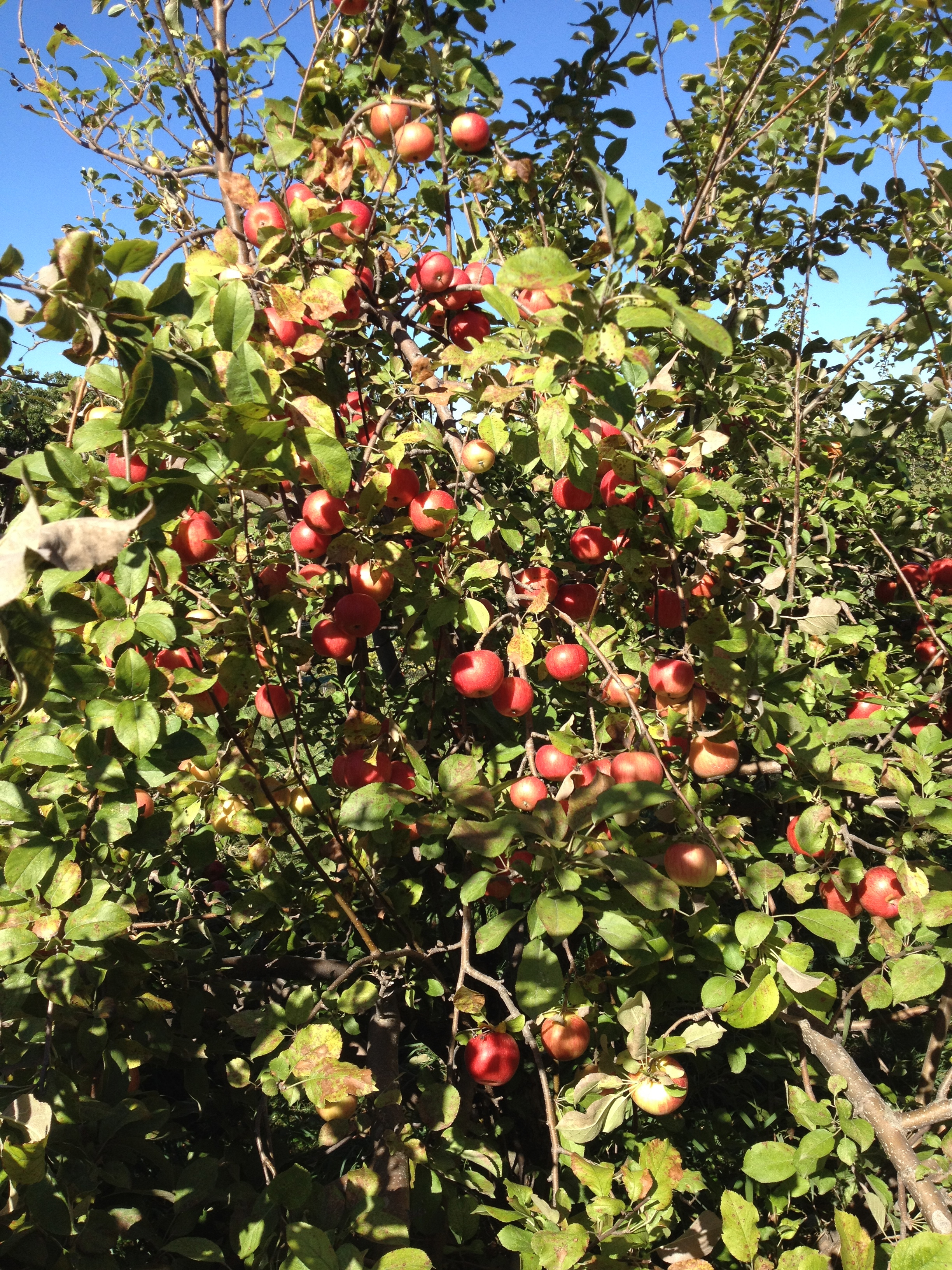 monday mornings  apple orchards  ministry and change