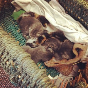 Someone left kittens at our church. So we saved them. Addie Zierman wrote about it here.